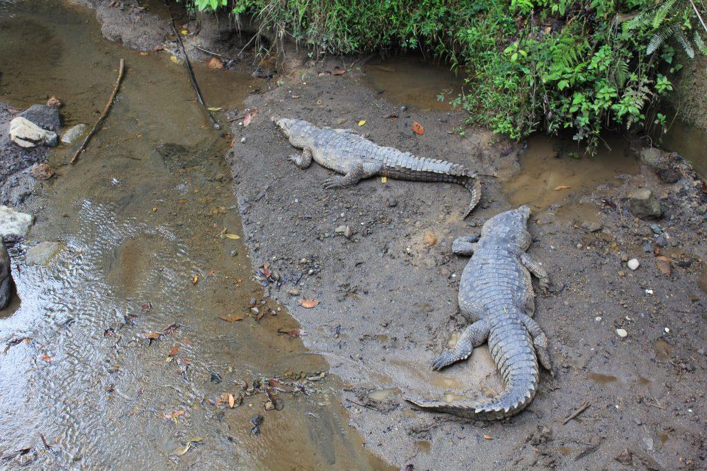 Costa Rica Arenal Monteverde Manuel Antonio
